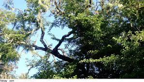 African Tree Essences Platbos